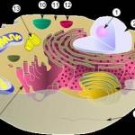 Hücre ne demek? Hücre nedir?