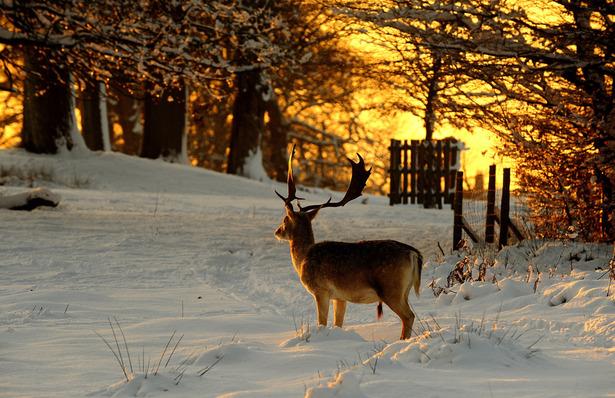kar, kış, manzara