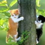 Evcil Kedilerin Hayatı ve Özellikleri