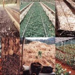 Akdeniz Bölgesi Tarım Ürünleri – Neler Yetişir?