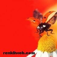 uğur böceği 010