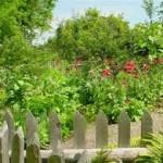 Bahçe Bitkileri Bölümü Meslek Tanıtımı İş Olanakları ve Avantajları