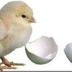 Yumurta İle Çoğalan Hayvanların İsimleri