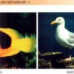 Yumurtayla ve Doğurarak Çoğalan Hayvanlar