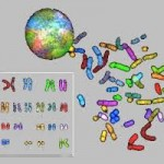 Genler Nasıl Gösterilir?