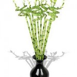 Bambu Çiçeğinin Özellikleri