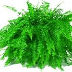Evdeki Havayı Temizleyen Bitkiler Hangileridir?