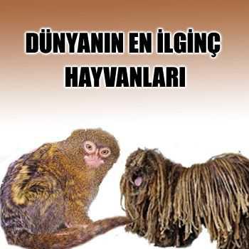 dunyanin-en-ilginc-hayvanlari
