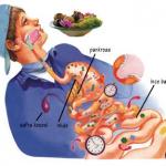 Sindirim Sistemine Yardımcı Olan Organlar Nelerdir?