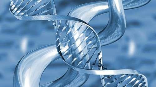 genetik, kalıtım, bilim