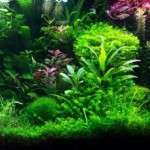Bitkilerin Zararlı Olduğu Hastalıklar