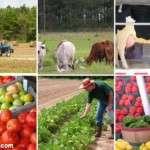 Teknolojik Tarım Neden Organik Tarımdan Üstün?
