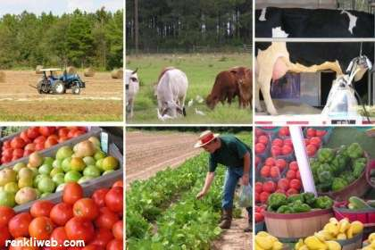 tarım, üretim, hayvancılık