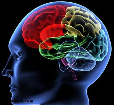 hafıza, beyin, zeka