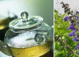 Doğal Antibiyotik Bitki Çayı: Ada Çayı