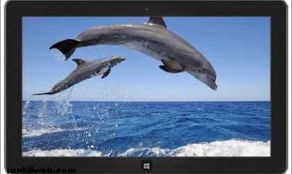 Windows 7 ve Windows 8 İçin Yunuslar Teması İndir!