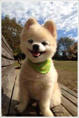dünyanın en güzel köpeği Shunsuke 010