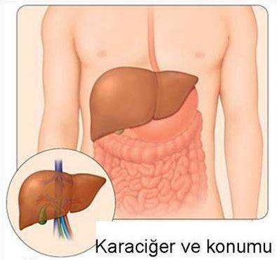 Karaciğer Nedir? Karaciğerin Görevleri, Kısımları ve Çalışma Şekli
