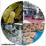 Biyoteknoloji nedir ve örnekleri nelerdir?