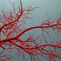 İnsanın en uzun damarı hangisidir?