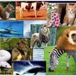 Memeli hayvanlar nedir?
