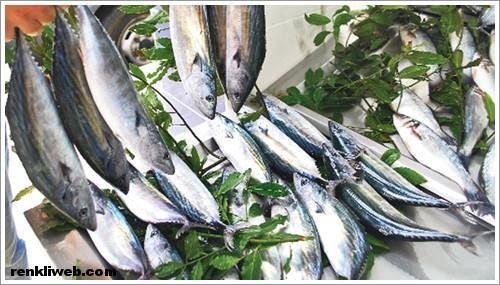 Palamut (balık)