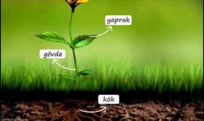 Bitkinin kısımları ve görevleri nelerdir?