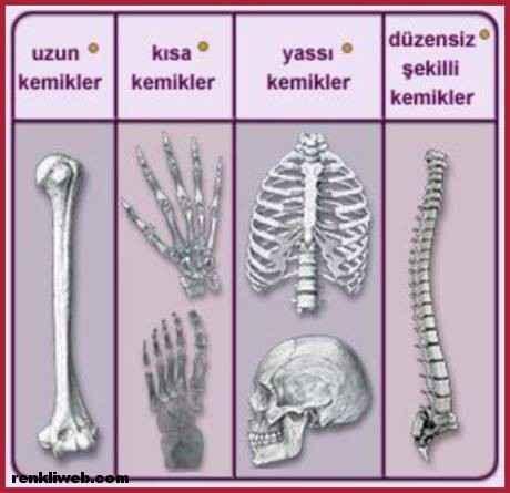 kemikler