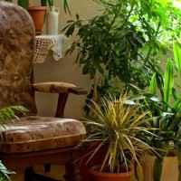 Evin Havasını Temizleyen Bitkiler – Sağlıklı Ev Çiçekleri