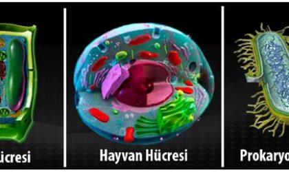 Bitki ve Hayvan Hücresi Arasındaki Farklar ve Benzerlikler