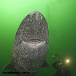 Köpekbalığı, Kutup Ayısı, Penguen ve Sincap Nasıl Çoğalır?