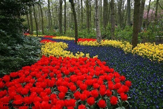 Hollandanın Neleri Meşhurdur Hollandanın Gezilecek Yerleri
