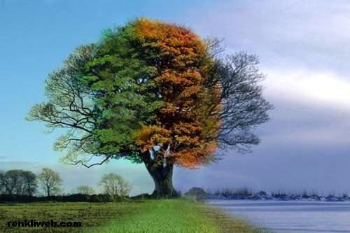 ağaç, bitki