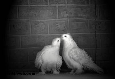 aşk resimleri 004