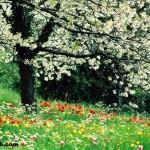 Mevsimlerin Özellikleri ve Belirtileri