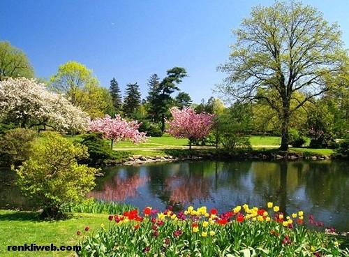 mevsim, ilkbahar, çiçekler