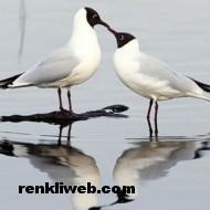 kuş resimleri 003