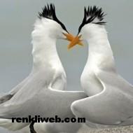 kuş resimleri 004