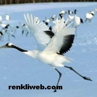kuş resimleri 008