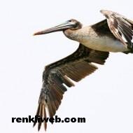 kuş resimleri 009