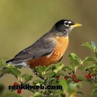 kuş resimleri 015