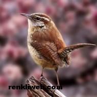 kuş resimleri 016