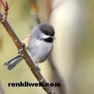 kuş resimleri 020