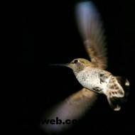 kuş resimleri 021