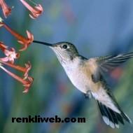 kuş resimleri 022