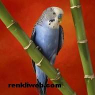 kuş resimleri 023