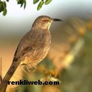 kuş resimleri 025