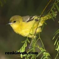 kuş resimleri 026
