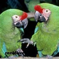 kuş resimleri 027