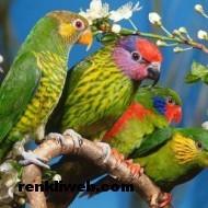 kuş resimleri 028
